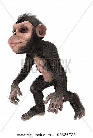 Little Chimp Walking