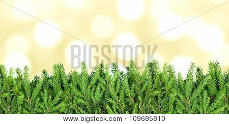 Stripe Of Fir Tree Branches On Blurry Background
