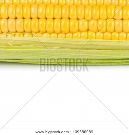 Fresh corn with green leaves