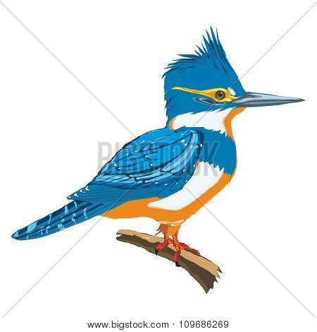 Realistic Kingfisher Painting Vector