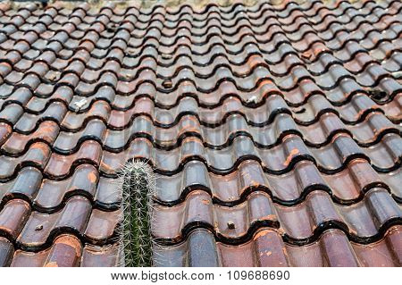 Colorful Tile Roof With Cactus