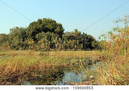 Okavango Del