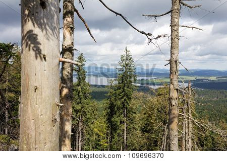A view in a forrest in the Czech republic.