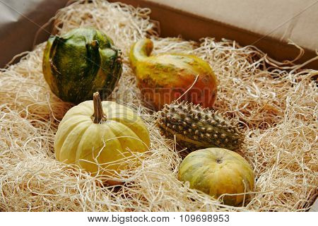 Vegetable Farm Set In Paper Box Filled With Straw