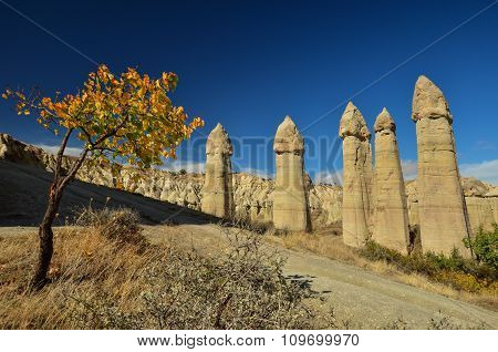 An autumn is in Cappadocia