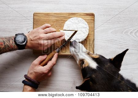 Tattoed Hands Cut Camember Sheese Knife Share Dog