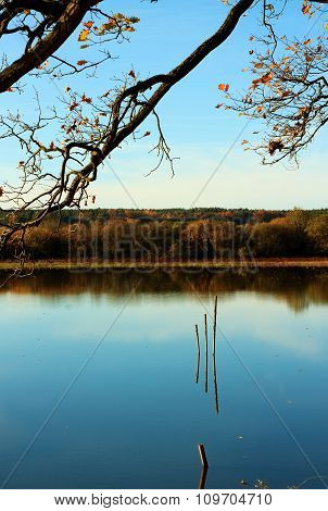 Three Wooden Sticks In Autumn Pond