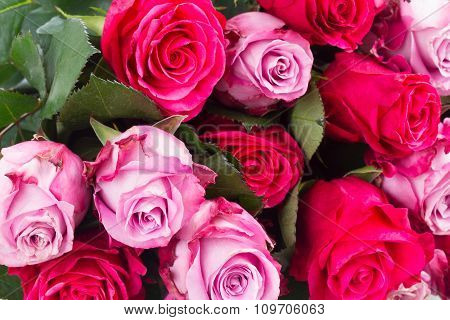 dark and light  pink roses  on table