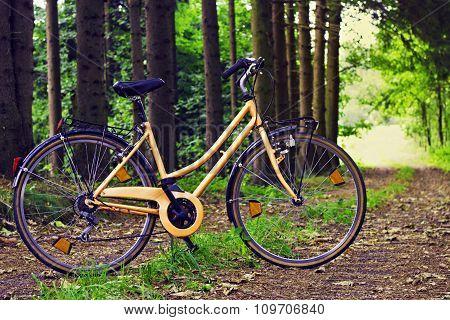 Orange bike on a path in the woods