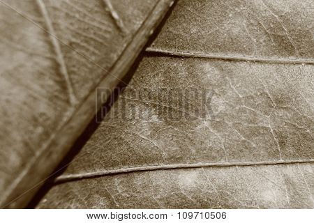 Sepia Tone Blurry Macro Background Of Dry Leaf, Focus On Center Of The Image.