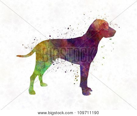 Old Danish Pointer In Watercolor