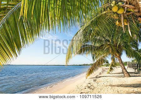 Beach Palm And Turquoise Sea At