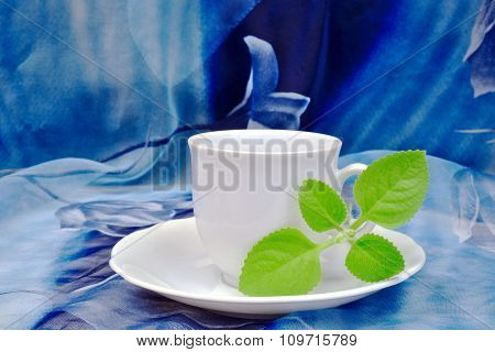 White Cup With Cuban Oregano On A Blue Backdrop