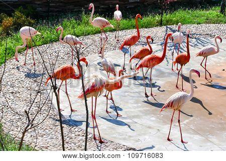 Graceful flamingos.