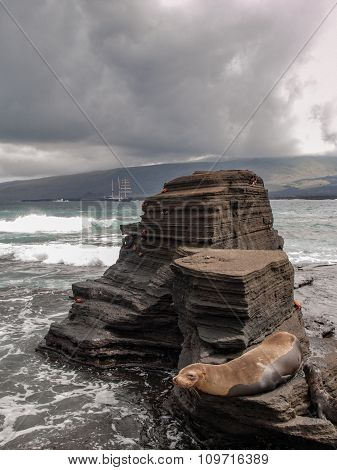 Rock Platform And Sea Lion