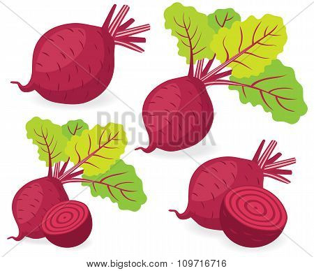 Beetroot Vector Illustrations