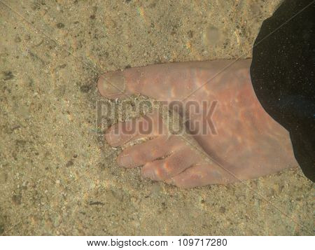 Tiny Fish And Foot