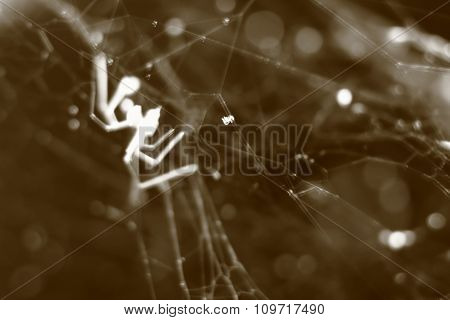 Sepia Tone Blurry Macro Background Of Cobweb And Spider.