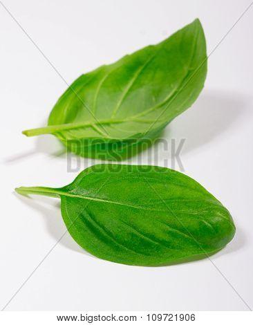 Green Fresh Basil Isolated On White.