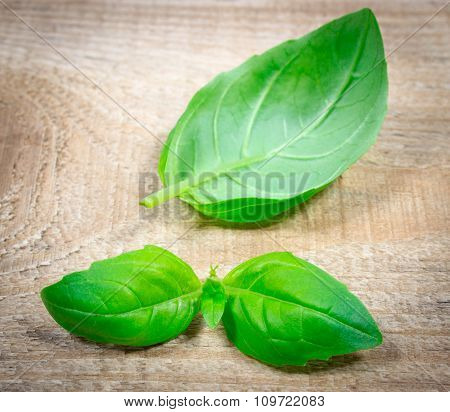 Green Fresh Basil On Wooden Background.
