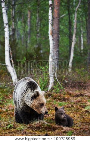 Mother Bear With Her Cub