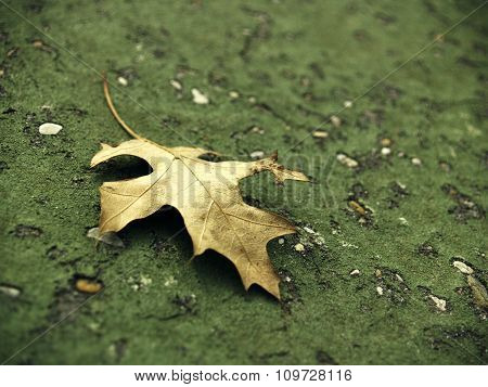 Brittle Leaf On Green Asphalt