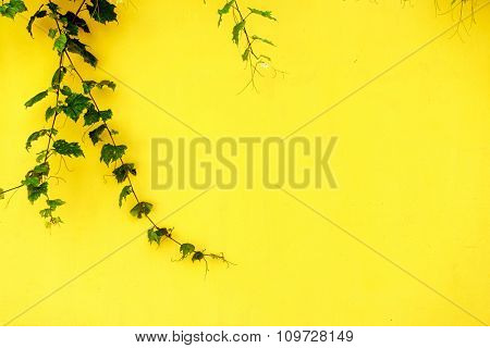 plant on yellow wall