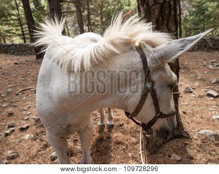 White Horse Crete