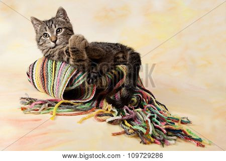 Striped Kitten Lying On The Scarf, Colored Background