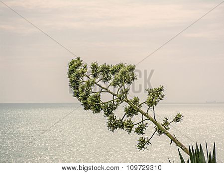 Sprout of agave on the sea background