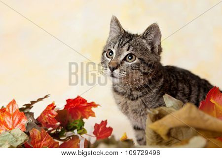 Tabby Kitten Peeking From The Leaves