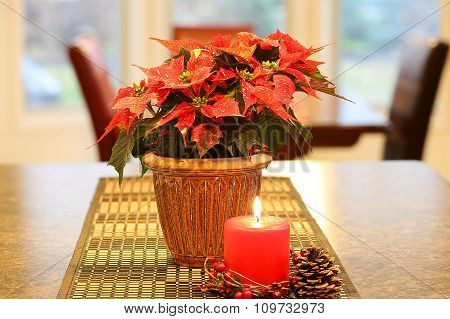 Poinsettia with red candle