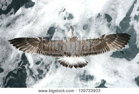 Seagull Over Waves
