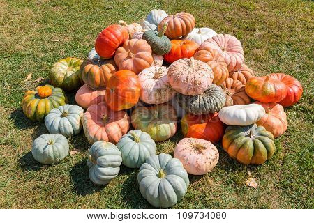 Pile Of Colorful Pumpkins In A Field.