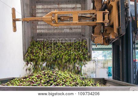Olive bin forklift