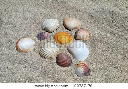 Sea Shells On The Sand