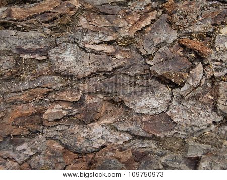 Texture Of Bark Of An Old Tree.
