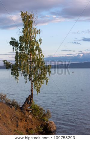 Birch At Sunset On The Lake With Fishermen