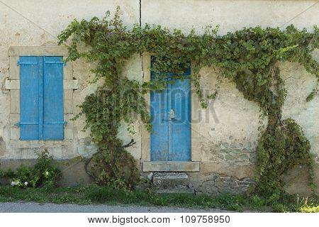 vines and blue door and window