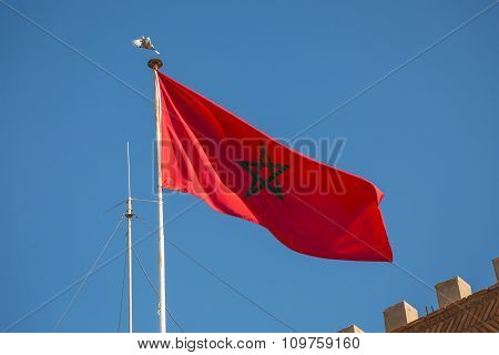 Moroccan Flag And Pigeon