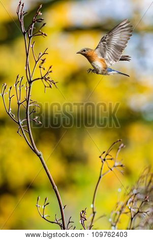 Bird In Flight Against Bright Yellow Background