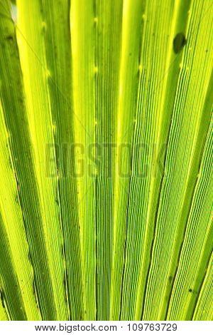 Abstract Green Leaf In Blur