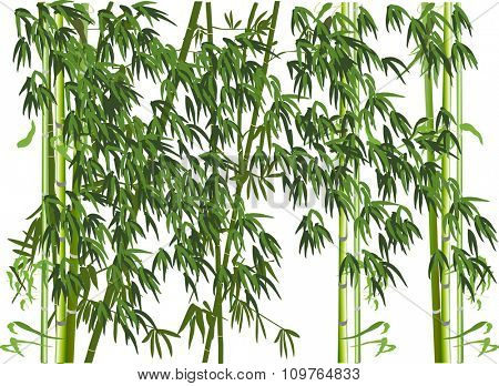 illustration with green bamboo plants