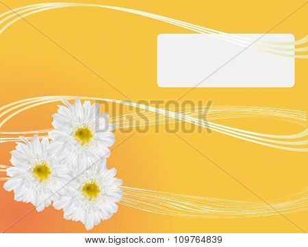 illustration with white chrysanthemum flowers isolated on yellow background