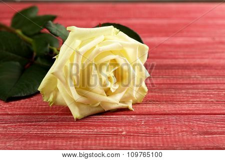 White Rose On A Red Wooden Table