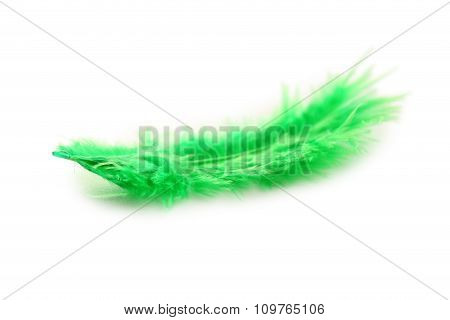 Feather Isolated On A White