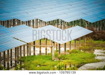 Solar Energy In Swamp