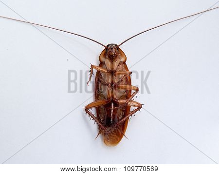 Cockroach , An Animal-borne Disease. And Nasty
