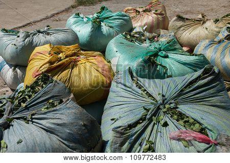 bundles of tea leaves