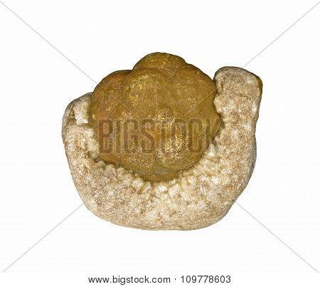 Fossilized sea bubble in quartz